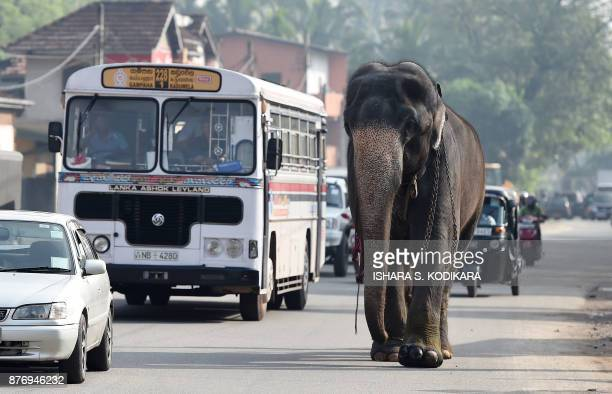 A Sri Lankan elephant walks along a street in Colombo on November 21 2017 / AFP PHOTO / ISHARA S KODIKARA