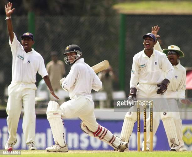 Sri Lankan fielder Thilan Samaraweera wicketkeeper Kumar Sangakkara and Mahela Jayawardena unsuccesfully appeal for Leg Befor Wicket as Zimbabwe...