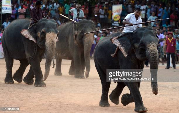 Sri Lankan mahouts ride elephants past spectators during traditional games held to mark the Sinhala and Tamil New Year in Homagama near Colombo on...