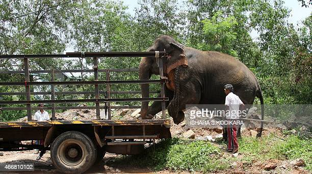 A Sri Lankan man on police orders loads an elephant onto a truck after breaking up a protest outside the national parliament in Colombo on March 19...