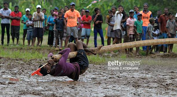 A Sri Lankan man participates in a traditional game in a muddy field during a Sinhala and Tamil New Year celebration in Kirindiwela on April 15 2016...
