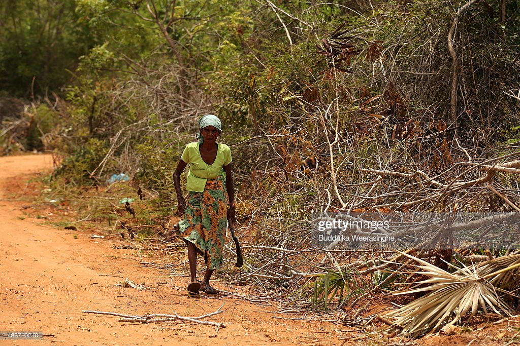 Sri Lankan minority ethnic Tamil woman holds an axe as walks to collect firewood in the land which has been recently released back to owners in April after 25 years as a military forces high security zone in the remote village of Thillipali on August 12,2015 in Jaffna, Sri Lanka. The UN's Human Rights Council investigation into alleged war crimes committed by both the Sri Lankan Government and the Liberation Tigers of Tamil Eelam (LTTE) during the Sri Lankan Civil War is due to be released in September.