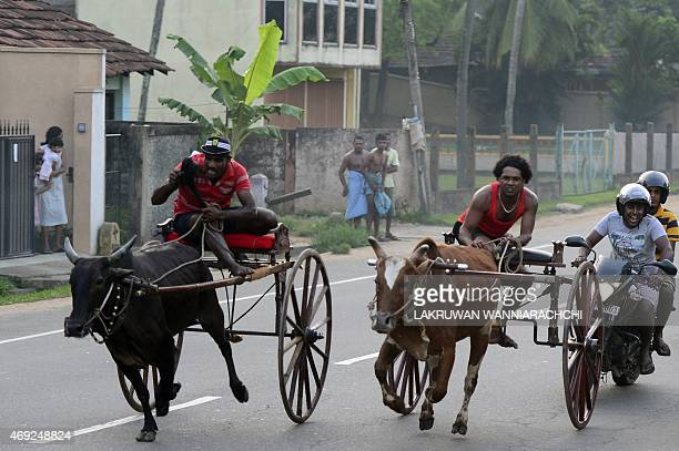 Sri Lankan participants control their bulls during a traditional cart race to mark the Sinhala and Tamil New Year in Kaduwela near Colombo on April...