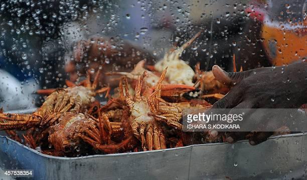 Sri Lankan street vendor sells fried crabs at the Galle Face Beach in Colombo on October 20 2014 AFP PHOTO/ Ishara S KODIKARA