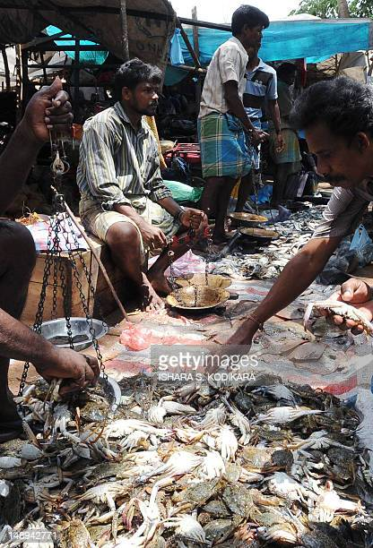 Sri Lankan Tamil seafood vendors arrange their makeshift display in Kilinochchi on April 29 2010 People travelling to the island's north stop by to...