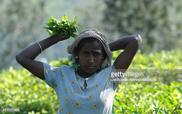 Sri Lankan tea picker works on a plantation in the central town of Kandy on November 21, 2013. The International Monetary Fund expects growth for the...
