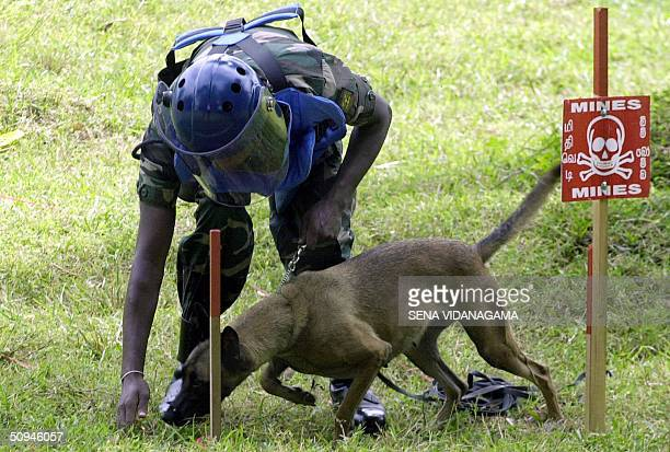Sri Lankan trooper and a sniffer dog donated by the US demonstrate their skills at demining in Embilipitiya some 185kms south of Colombo10 June 2004...