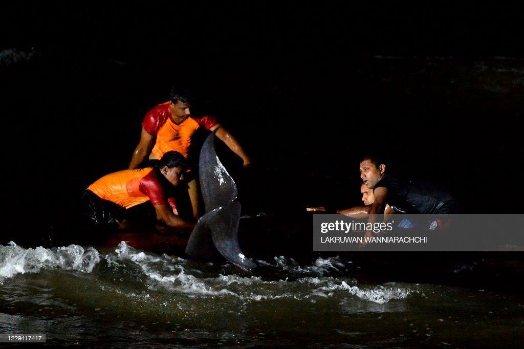 SRI LANKA-WHALES-ANIMAL-ENVIRONMENT : News Photo