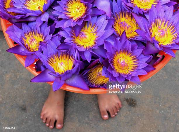 A Sri Lankan woman holds up a pot of jasmine flowers to place before a Buddhist shrine in Kelaniya in Colombo on July 17 2008 This predominantly...