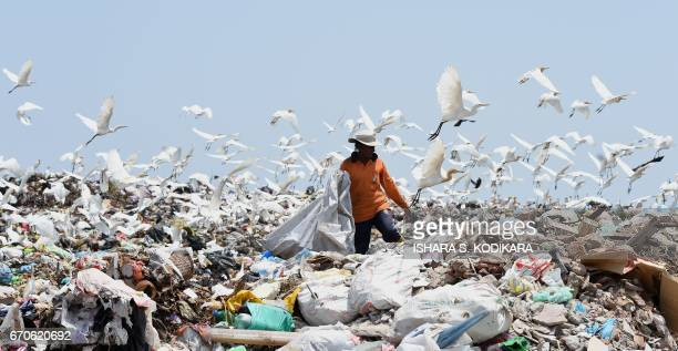 Sri Lankan worker sorts garbage at a dump in Karadiyana a suburb of Colombo on April 20 after the city's main landfill closed after a garbage...