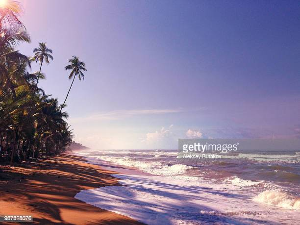 sri lanka's heaven - lanka stock pictures, royalty-free photos & images