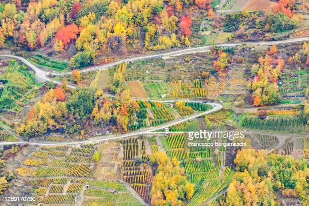 s-shape road between vineyards in autumn - italia stockfoto's en -beelden