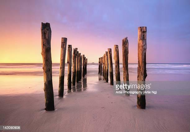 st clair beach, dunedin, south island, new zealand - dunedin new zealand stock pictures, royalty-free photos & images
