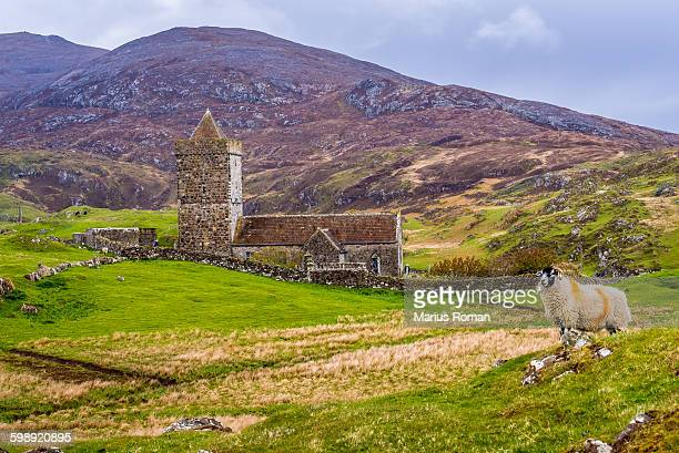 st. clements church rodel, spring, sheep. - tweed stock pictures, royalty-free photos & images