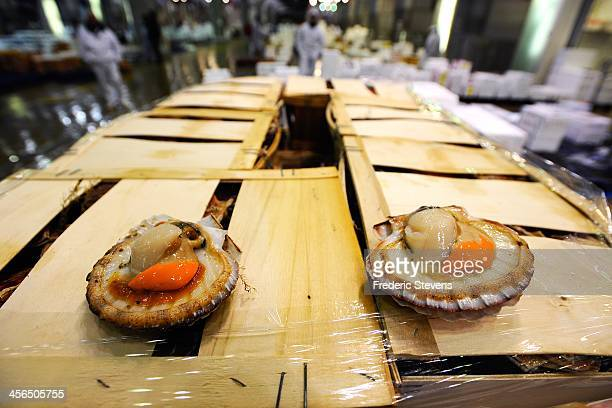 St Jacques scallops sit on display at the Rungis market seafood department on December 13 2013 in Rungis France Rungis is the world's largest...