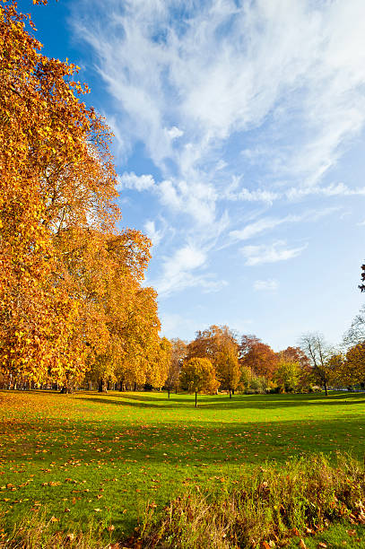 St James Park During Autumn In London Wall Art