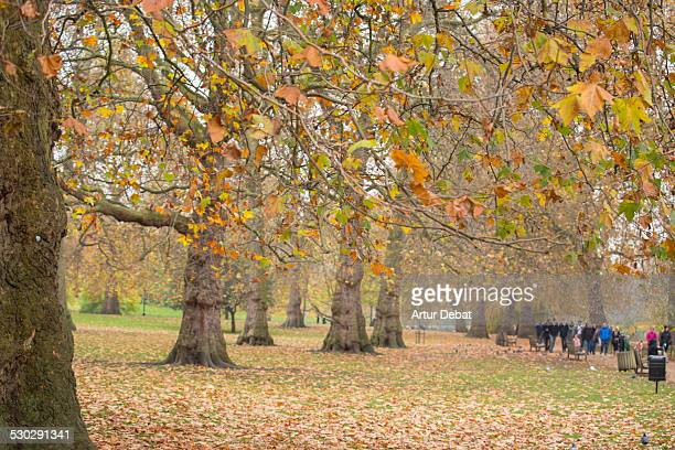 St James Park in London with autumn colors