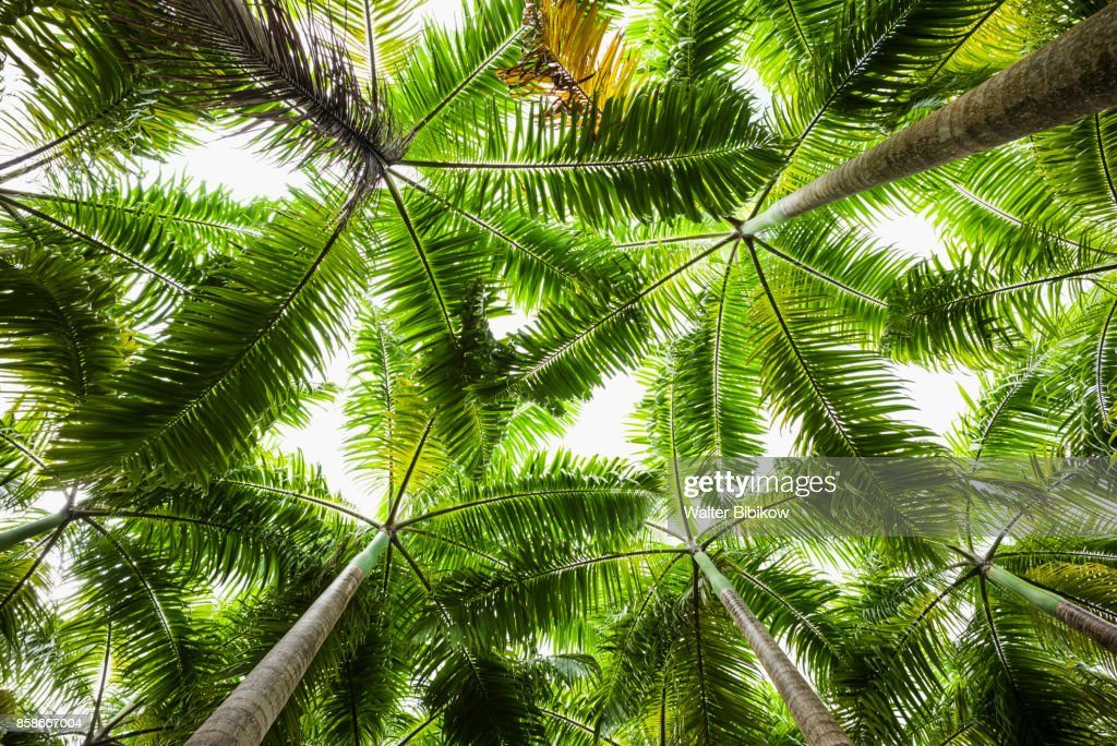 St. Kitts and Nevis, St. Kitts, Detail : Stock Photo