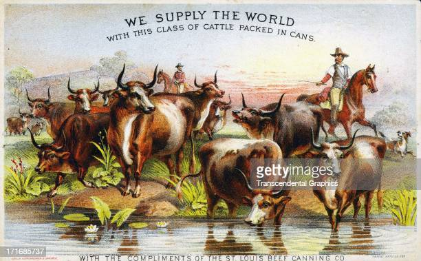 St Louis Beef Canning Co uses a cowboy scene to sell its beef on this trade card published circa 1880 in New York City