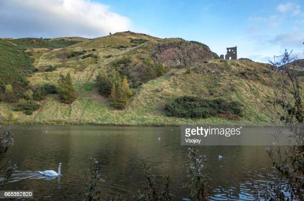 St Margaret's Loch and the swans, Holyrood Park, Edinburgh