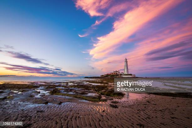 st. mary's lighthouse at low tide - sunset stock pictures, royalty-free photos & images