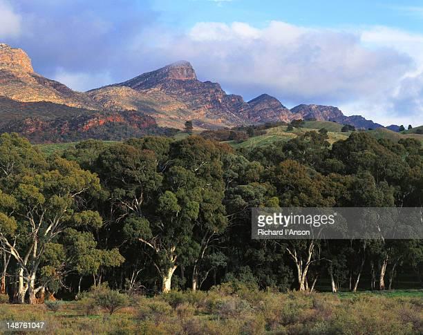 St Mary's Peak and ranges - Flinders Ranges National Park, South Australia