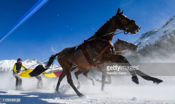 St Moritz Switzerland 17 February 2019 Sociopath and driver Erich Bottlang during the Grand Prix Credit Suisse skikjöring race at the White Turf...
