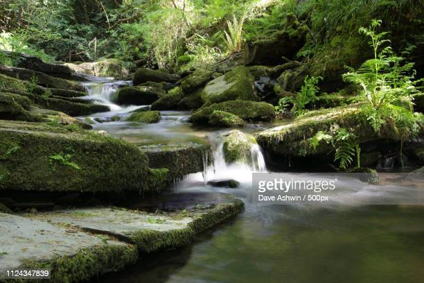 st nectans glen trethevy tintagel cornwall england - dave ashwin stock pictures, royalty-free photos & images