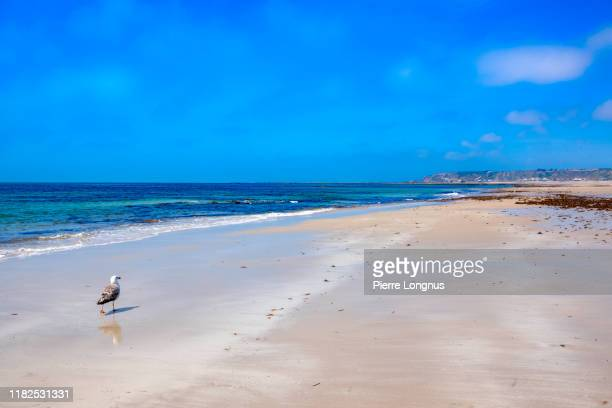 st. ouen's bay beach - beach stock pictures, royalty-free photos & images