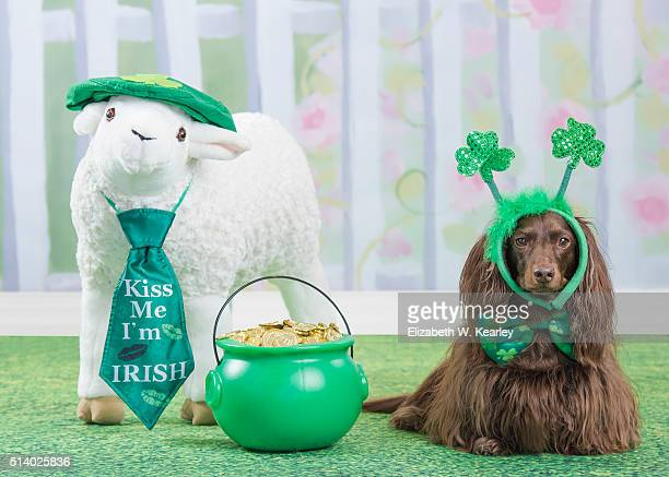 st. patrick's day dog with sheep and bucket of gold - charlotte long stock pictures, royalty-free photos & images