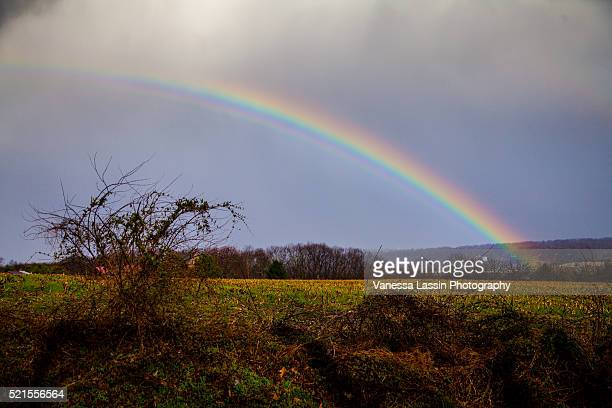st. patty's day rainbow - vanessa lassin foto e immagini stock