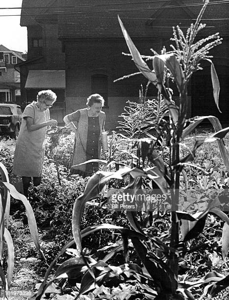 AUG 22 1974 AUG 23 1974 St Thursday They were two of several hundred persons participating in the Mayor's Senior Citizen Vegetable Garden Project who...