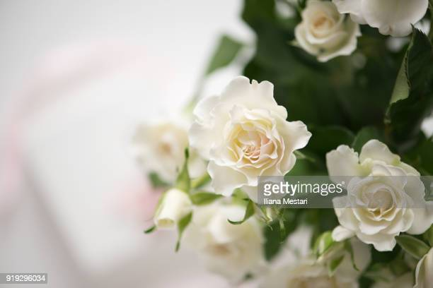 st. valentine's white roses and present with a pink ribbon - rosaceae stock photos and pictures
