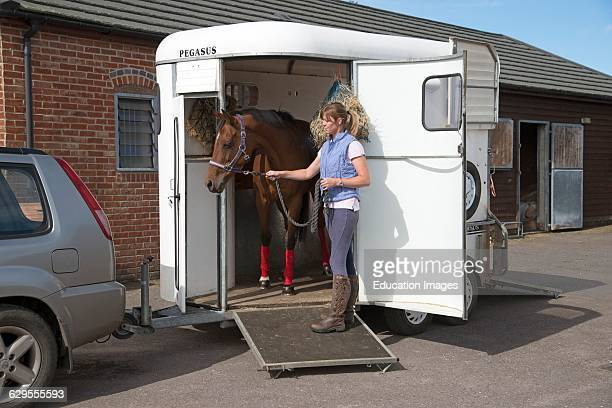 Stable girl leading horse from a horsebox