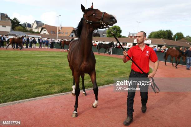 A stable hand walks a thoroughbred foal during the Yearlings sales one of the world renowned annual thoroughbred sales in Deauville on August 19 2017...