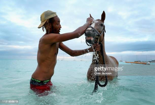 Stableboys wash the racehorses of the Barbados Garrison Savannah in the Caribbean early in the morning on March 22, 2019 in Bridgetown, Barbados. The...