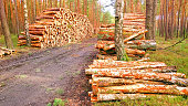 stack logs pine forest timber firewood