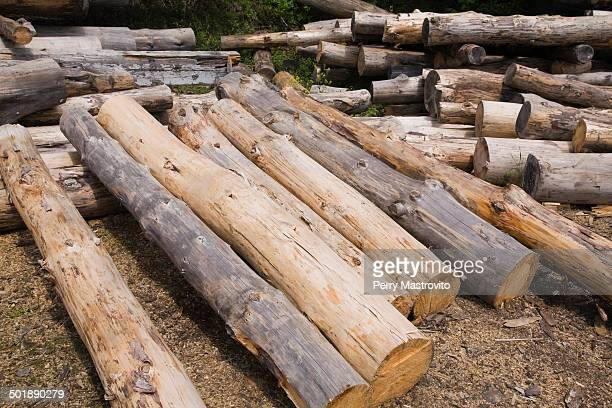 stack of eastern white pine tree logs, laurentians, quebec, canada - eastern white pine stock pictures, royalty-free photos & images