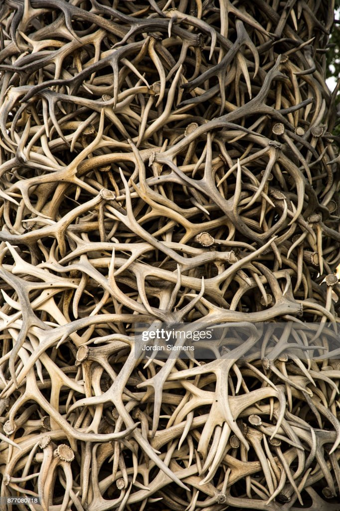 A stack of elk antlers : Stock Photo