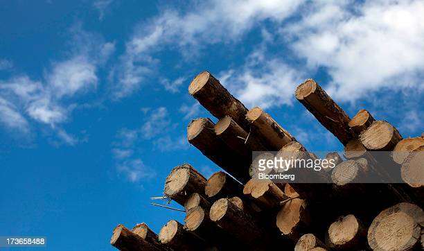 A stack of freshly cut pine trees sits in a pile west of Quesnel British Columbia Canada on Wednesday July 10 2013 West Fraser Timber Co the largest...