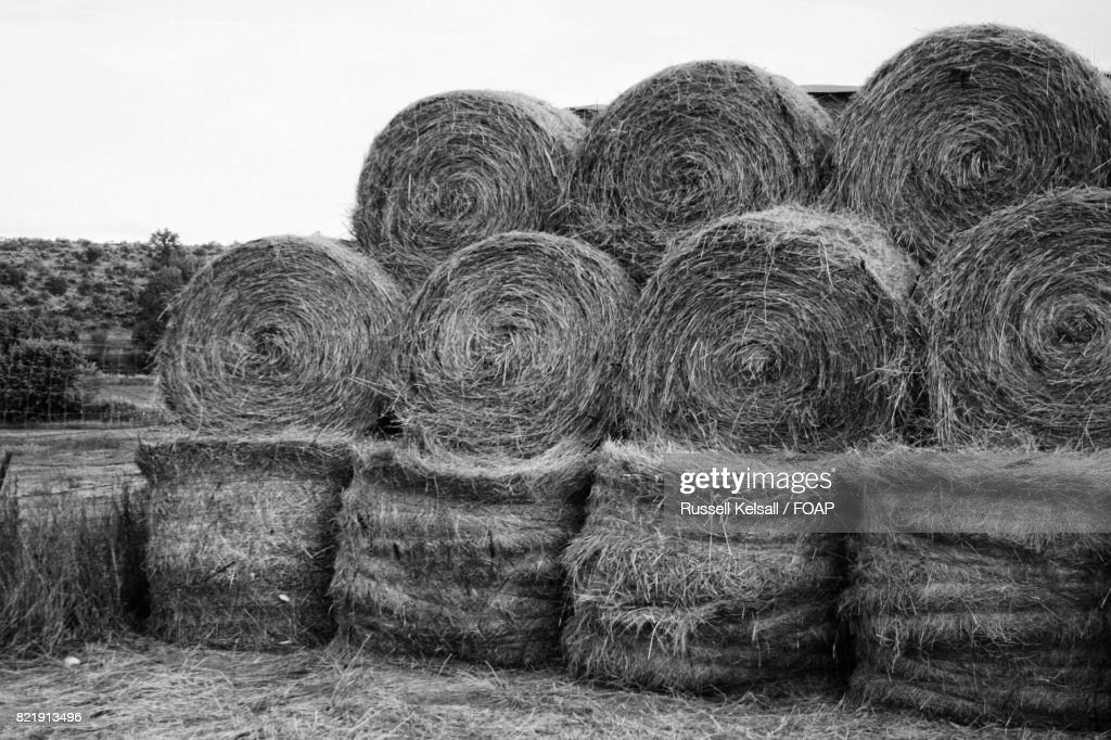 Stack of grass hay bales : Stock Photo