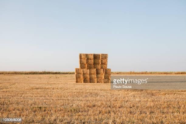 stack of hay bales on field against clear sky - heno fotografías e imágenes de stock