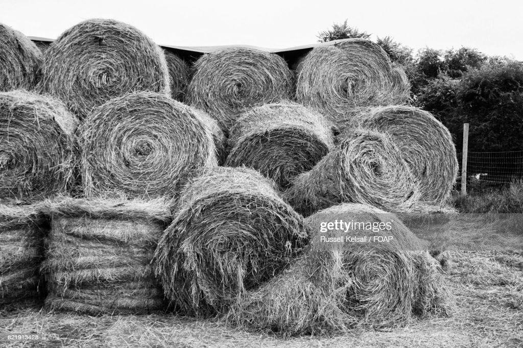 Stack of hay bales on field : Stock Photo