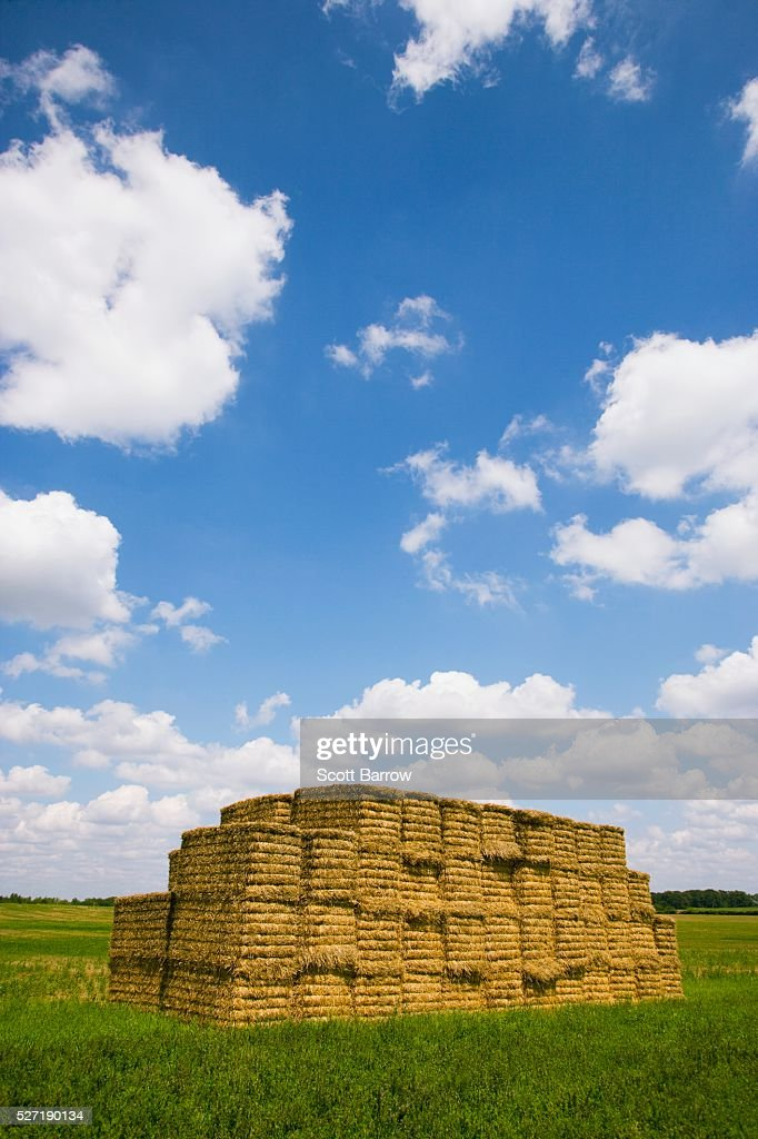 Stack of hay bales : Foto stock