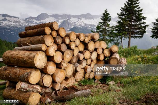 stack of large fir trunks in mountain landscape - log stock pictures, royalty-free photos & images