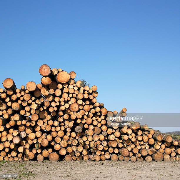 Stack of logs against blue sky.