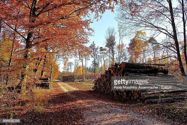 Stack Of Logs By Pathway In Forest During Autumn Season