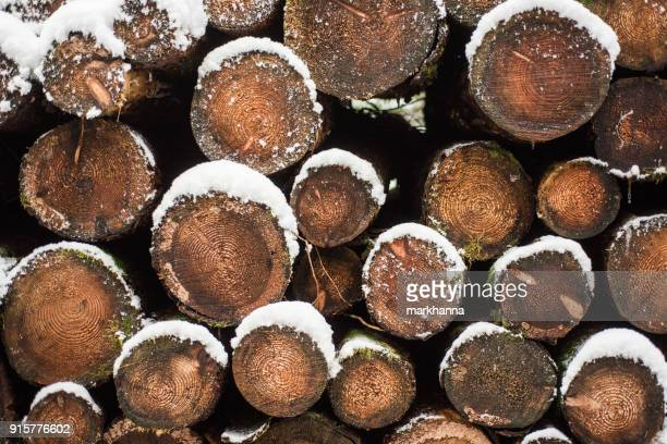 Stack of logs in the snow