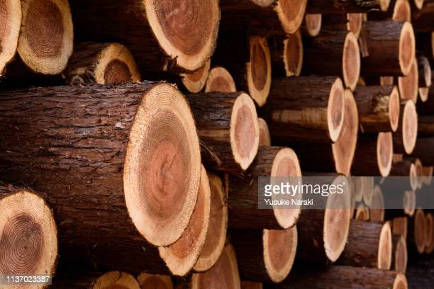 stack of logs - log stock pictures, royalty-free photos & images