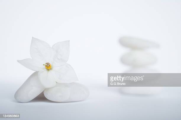 stack of white pebbles and jasmine flower - jasmine stock photos and pictures